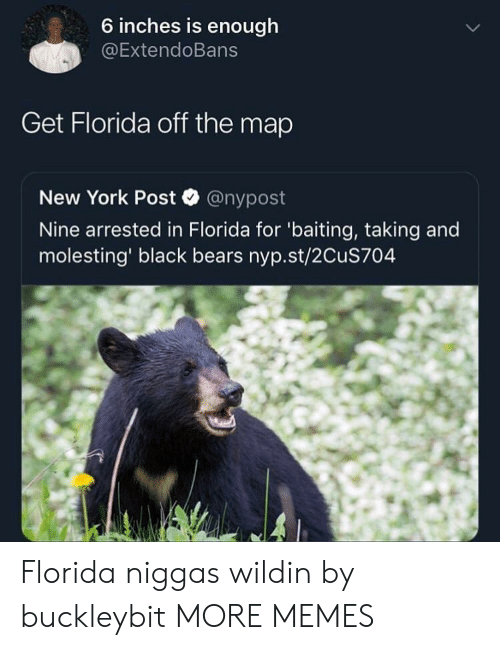 Baiting: 6 inches is enough  @ExtendoBans  Get Florida off the map  New York Post @nypost  Nine arrested in Florida for 'baiting, taking and  molesting' black bears nyp.st/2CuS704 Florida niggas wildin by buckleybit MORE MEMES