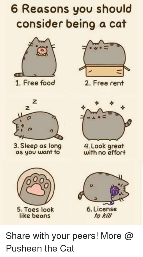 Grumpy Cat, Pusheen, and Cat: 6 Reasons you should  consider being a cat  1. Free food  2. Free rent  3. Sleep as long  OO  with no effort  as you want to  6. License  5. Toes look  to kill  like beans Share with your peers!  More @ Pusheen the Cat