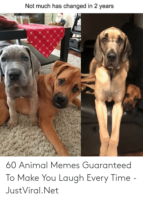 Make You Laugh: 60 Animal Memes Guaranteed To Make You Laugh Every Time - JustViral.Net