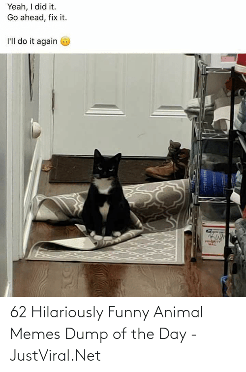 funny animal memes: 62 Hilariously Funny Animal Memes Dump of the Day - JustViral.Net