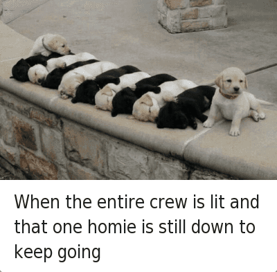 Drunk, Homie, and Lit: When the entire crew is lit and that one homie is still down to keep going When the entire crew is lit and that one homie is still down to keep going