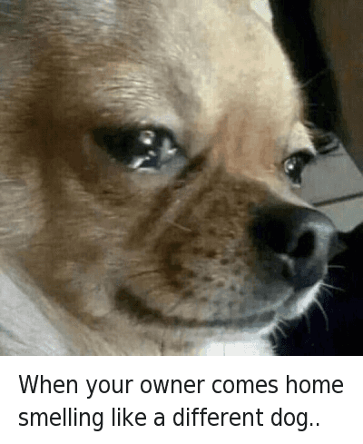 Dog Crying Owner Comes Home
