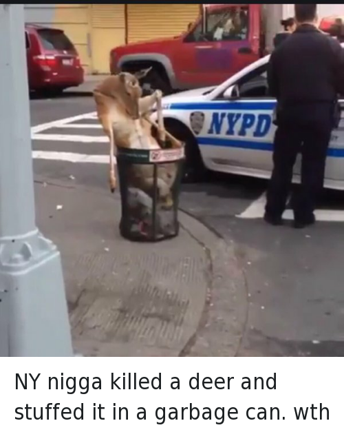 Deer, New York, and NY Niggas: NY nigga killed a deer and stuffed it in a garbage can. wth
