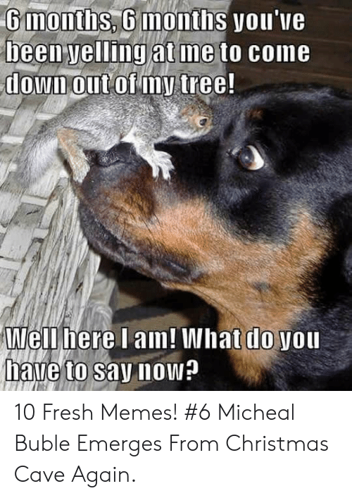 Michael Buble Christmas Meme: 6months, 6 months you've  been yelling at me to come  downout of my tree!  Well here I am! What do you  have to say now? 10 Fresh Memes! #6 Micheal Buble Emerges From Christmas Cave Again.