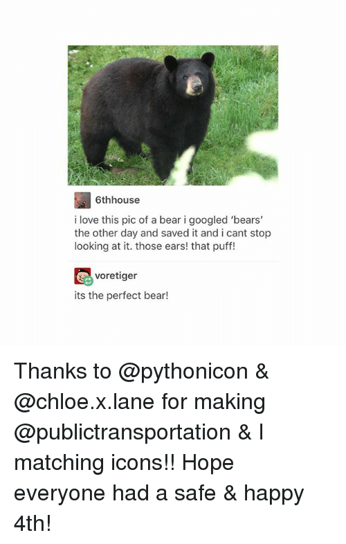Love, Tumblr, and Bear: 6thhouse  i love this pic of a bear i googled 'bears'  the other day and saved it and i cant stop  looking at it. those ears! that puff!  voretiger  its the perfect bear! Thanks to @pythonicon & @chloe.x.lane for making @publictransportation & I matching icons!! Hope everyone had a safe & happy 4th!