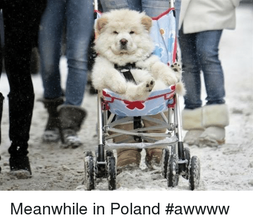 7 meanwhile in poland awwww 1386827 🔥 25 best memes about meanwhile in poland meanwhile in poland