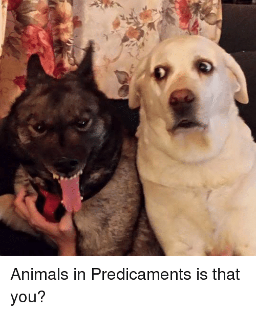 7l animals in predicaments is that you 8571461 search minecraft animals memes on me me,Dank Memes Texture Pack Mcpe