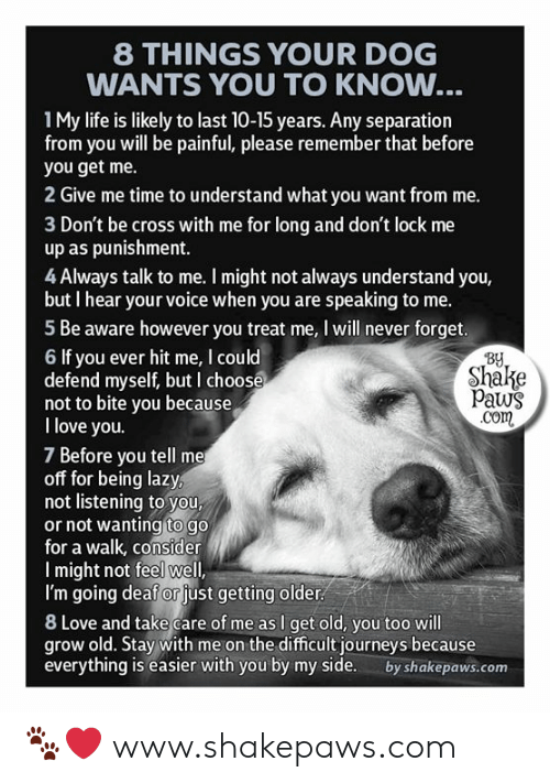 You Get Me: 8 THINGS YOUR DOG  WANTS YOU TO KNOW...  1My life is likely to last 10-15 years. Any separation  from you will be painful, please remember that before  you get me.  2 Give me time to understand what you want from me.  3 Don't be cross with me for long and don't lock me  up as punishment.  4 Always talk to me. I might not always understand you,  but I hear your voice when you are speaking to me.  5 Be aware however you treat me, I will never forget.  By  Shake  Paws  .com  6 If you ever hit me, I could  defend myself, but I choose  not to bite you because  I love you.  7 Before you tell me  off for being lazy,  not listening to you,  or not wanting to go  for a walk, consider  Imight not feel well,  I'm going deaf or just getting older  8 Love and take care of me as I get old, you too will  grow old. Stay with me on the difficult journeys because  everything is easier with you by my side.  by shakepaws.com 🐾❤️ www.shakepaws.com