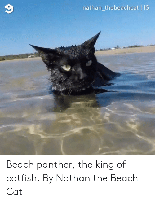 Catfished: 9  nathan_thebeachcat IG Beach panther, the king of catfish.  By Nathan the Beach Cat