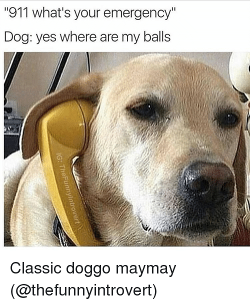 "Maymays: ""911 what's your emergency""  Dog: yes where are my balls Classic doggo maymay (@thefunnyintrovert)"