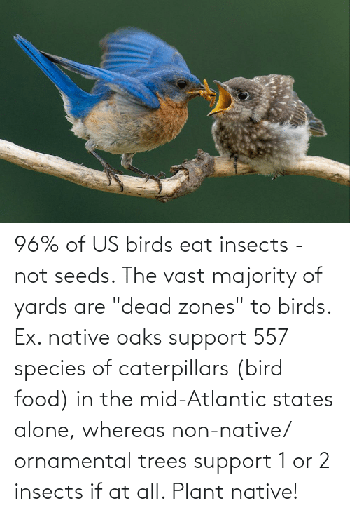 """seeds: 96% of US birds eat insects - not seeds. The vast majority of yards are """"dead zones"""" to birds. Ex. native oaks support 557 species of caterpillars (bird food) in the mid-Atlantic states alone, whereas non-native/ ornamental trees support 1 or 2 insects if at all. Plant native!"""