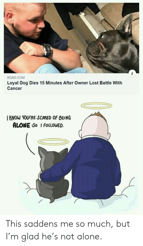 followed: 9GAG COM  Loyal Dog Dies 15 Minutes After Owner Lost Battle With  Cancer  KNOW YOU'RE SCARED OF BEING  ALONE So I FOLLOWED This saddens me so much, but I'm glad he's not alone.