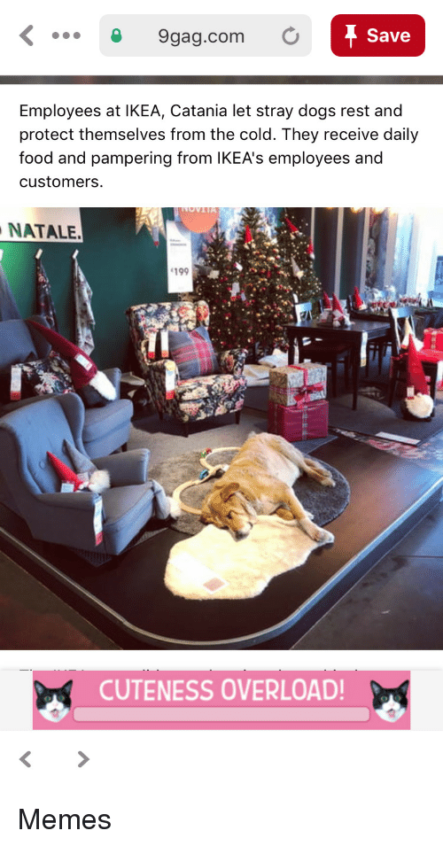 stray dogs: 9gag.com O  Save  Employees at IKEA, Catania let stray dogs rest and  protect themselves from the cold. They receive daily  food and pampering from lKEA's employees and  customers  NATALE.  199  CUTENESS OVERLOAD Memes