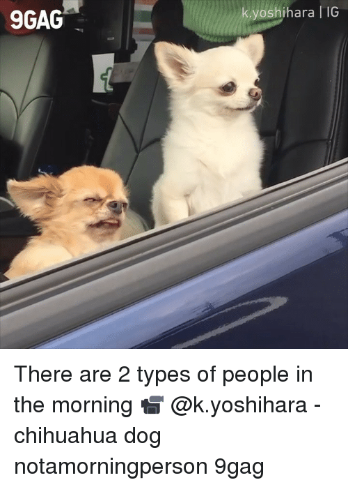 2 Types Of People: 9GAG  yoshihara IG There are 2 types of people in the morning 📹 @k.yoshihara - chihuahua dog notamorningperson 9gag