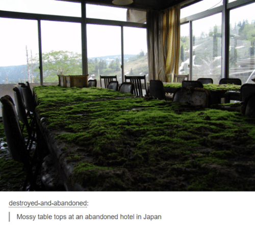 table top: destroyed-and-abandoned  I  Mossy table tops at an abandoned hotel in Japan
