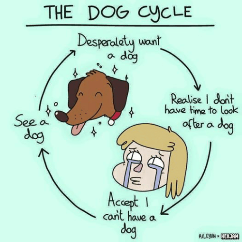 how to look after a dog games