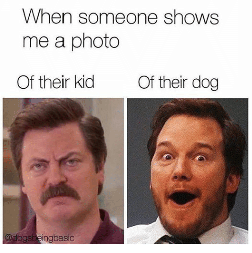 Dogs: When someone shows  me a photo  Of their kid  Of their dog  @dogs  ngbasic