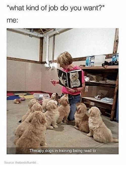 "Dogs: ""what kind of job do you want?""  me:  DOG  Therapy dogs in training being read to  Source: thebestoftumbli,.."
