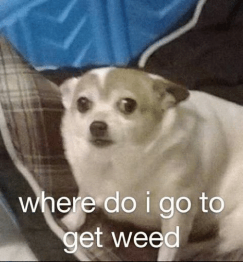Where Do I Go To Get Weed  Weed Meme On Sizzle