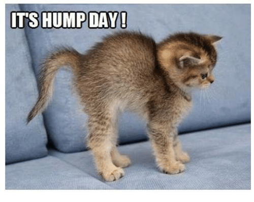 Funny Hump Day Memes of 2017 on SIZZLE | Wednesday Meme