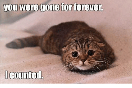 Grumpy Cat, Forever, and Counting: you were gone for forever.  I counted