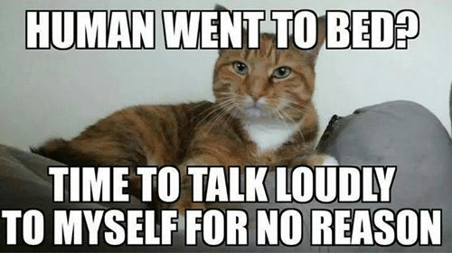 talking loud: HUMAN WENT TO BED  TIME TO TALK LOUDLY  TO MYSELF FOR NO REASON