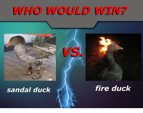 Fire, Duck, and Ducks: WHO WOULD  fire duck  sandal duck