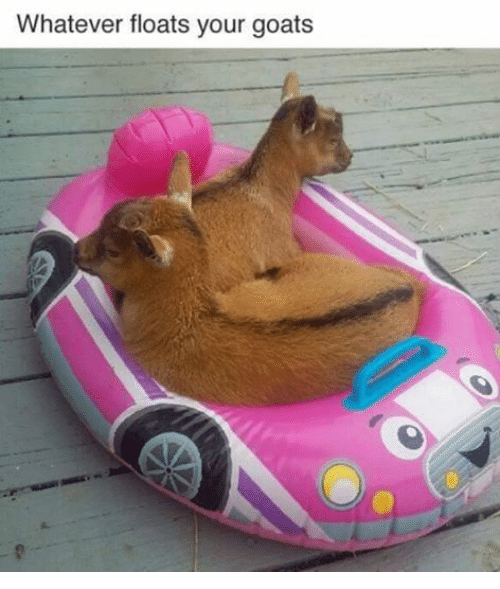 Goat, Humans of Tumblr, and Yours: Whatever floats your goats
