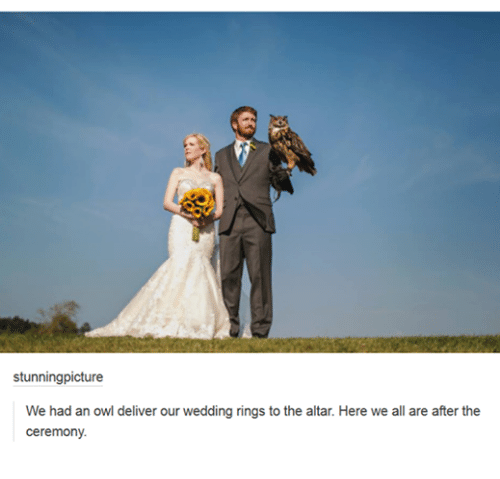 Wedding Altar Tumblr: Stunningpicture We Had An Owl Deliver Our Wedding Rings To