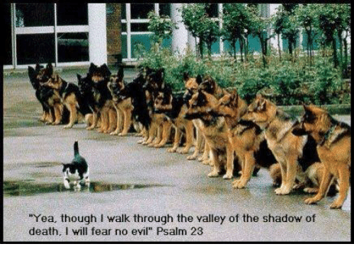 """Death, Christian Memes, and Fear: """"Yea, though walk through the valley of the shadow of  death. I will fear no eyil"""" Psalm 23"""