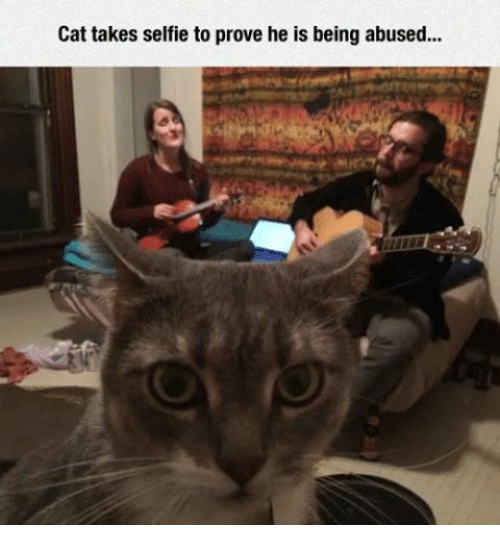 Cats, Selfie, and Grumpy Cat: Cat takes selfie to prove he is being abused...