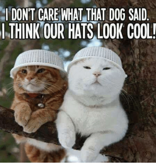 Dogs: I DON'T CARE WHAT THAT DOG SAID  THINK OUR HATS LOOK COOL!