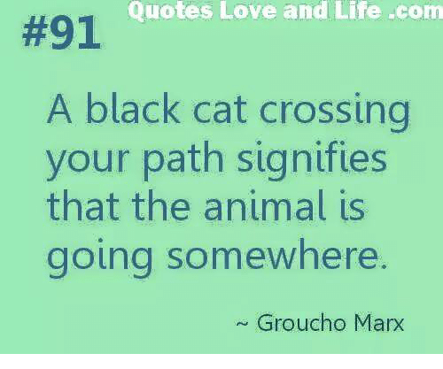 grouchos: Quotes Love and Life -com  #91  A black cat crossing  your path signifies  that the animal is  going somewhere.  Groucho Marx