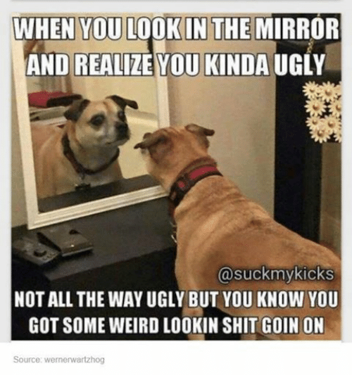 Funny, Shit, and Tumblr: WHEN YOU LOOKIN THE MIRROR  AND REALIZE YOU KINDA UGLY  @suck my kicks  NOT ALL THE WAYUGLY BUT YOU KNOW YOU  GOT SOME WEIRD LOOKIN SHIT GOIN ON  Source: Wernerwartzhog