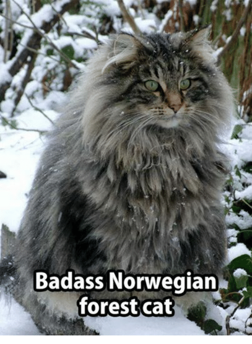 Image result for badass cats