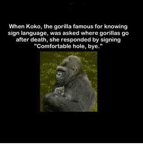 """Comfortable, Holes, and Death: When Koko, the gorilla famous for knowing  sign language, was asked where gorillas go  after death, she responded by signing  """"Comfortable hole, bye."""""""