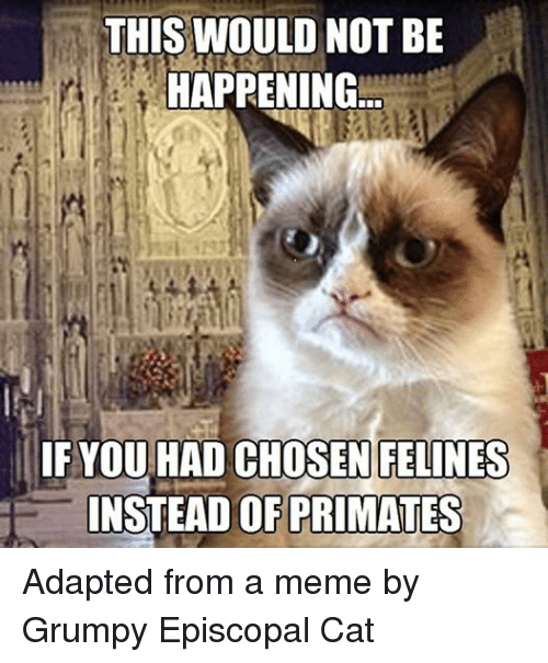 Cats, Meme, and Memes: THIS WOULD NOT BE  HAPPENING  IF YOU HAD CHOSEN FELINES  INSTEAD OF PRIMATES Adapted from a meme by Grumpy Episcopal Cat