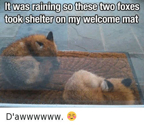 Funny Rain Memes Of 2017 On Sizzle Littled