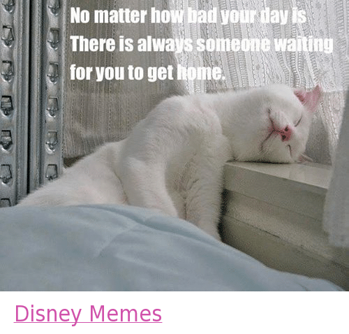disney memes: No matter how bad your day is  There is always someone waiting  for you to get home. Disney Memes