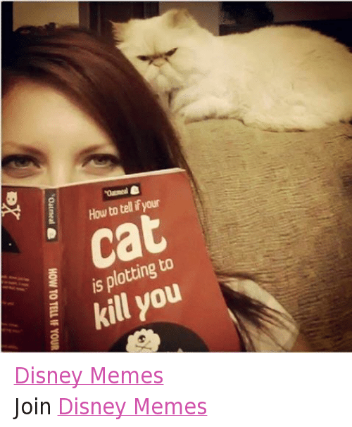 disney memes: How to tell ifyour  Cat  is plotting to  kill you  to u  go  is k  -o  at meal ea HOW TO TELL IF YOUR  er Disney MemesJoin Disney Memes