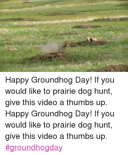 Dogs, Ups, and Videos: Happy Groundhog Day! If you would like to prairie dog hunt, give this video a thumbs up.Happy Groundhog Day! If you would like to prairie dog hunt, give this video a thumbs up. ‪#‎groundhogday‬