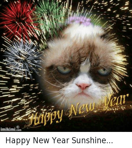 funny grumpy cat and new year s memes of 2016 on sizzle