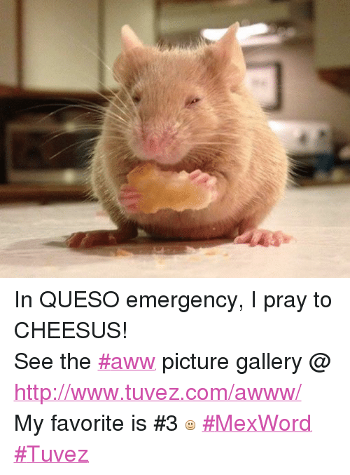 Mexican Word of the Day: In QUESO emergency, I pray to CHEESUS! See the #aww picture gallery @ http://www.tuvez.com/awww/ My favorite is #3   #MexWord #Tuvez
