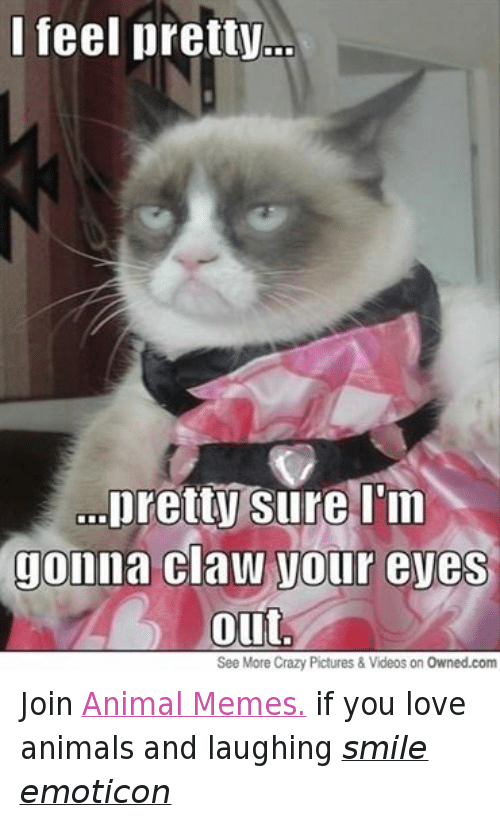 Animals, Anime, and Crazy: I feel pretty  ...pretty  sure I'm  Jonna Claw Vour eves  Out  See More Crazy Pictures & Videos on Owned.com Join Animal Memes. if you love animals and laughing smile emoticon