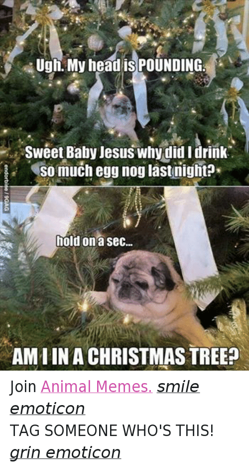 Meme Smile: Ugh, My head is POUNDING  Sweet Baby Jesus why did I drink  So much egg nog last nightP  hold on a sec...  AMIIN A CHRISTMAS TREE? Join Animal Memes. smile emoticon TAG SOMEONE WHO'S THIS! grin emoticon