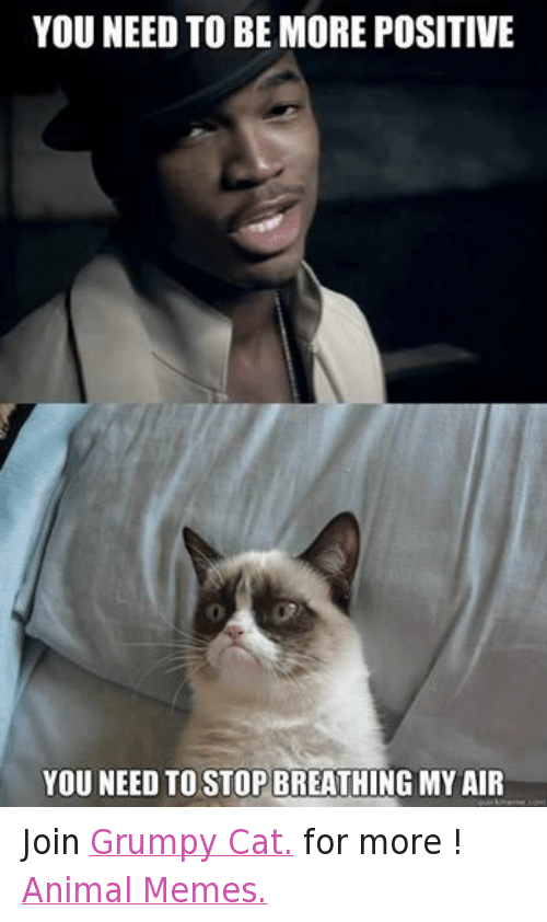 Animals, Anime, and Cats: YOU NEED TO BE MORE POSITIVE  YOU NEED TO STOP BREATHING MY AIR  guickrnerne comt Join Grumpy Cat. for more ! Animal Memes.