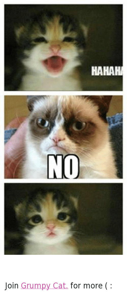 HAHAHA NO NO Join Grumpy Cat for More | Cats Meme on SIZZLE