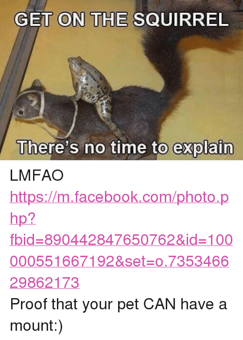 DnD: GET ON THE SQUIRREL  There's no time to explain LMFAO https://m.facebook.com/photo.php?fbid=890442847650762&id=100000551667192&set=o.735346629862173Proof that your pet CAN have a mount:)