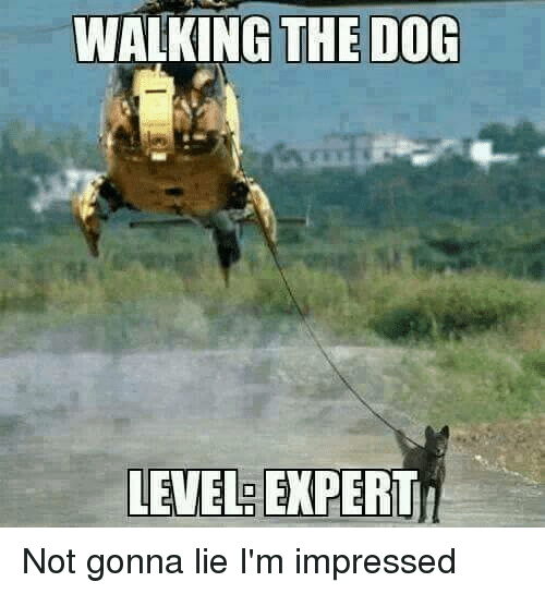 Dogs, Military, and Lying: WALKING THE DOG  LEVEL  EXPERT Not gonna lie I'm impressed