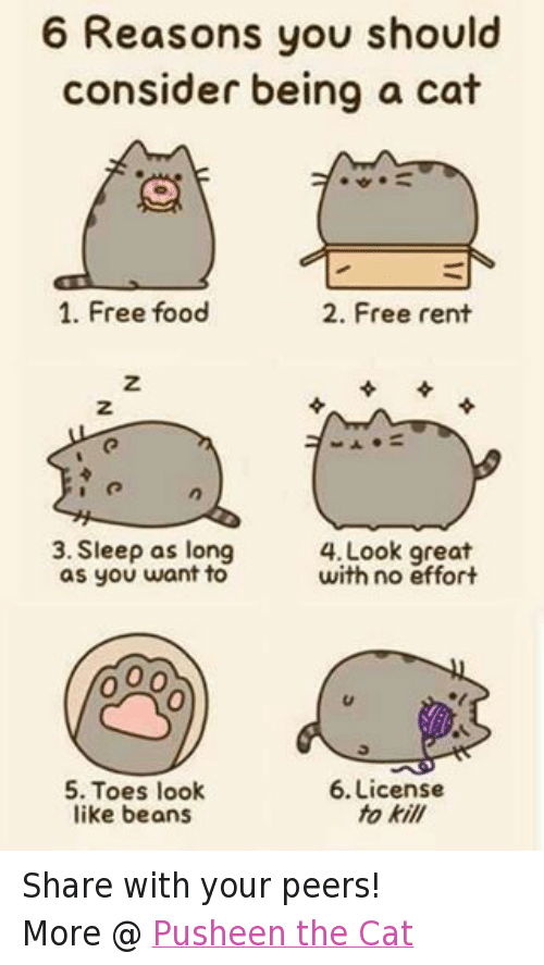 Cats, Food, and Grumpy Cat: 6 Reasons you should  consider being a cat  1. Free food  2. Free rent  3. Sleep as long  OO  with no effort  as you want to  6. License  5. Toes look  to kill  like beans Share with your peers!  More @ Pusheen the Cat
